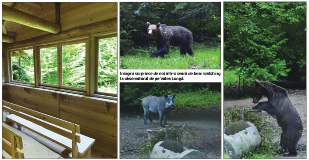 Urşi, lupi, râşi şi porci mistreţi, la cină. Vrei să-i vezi?